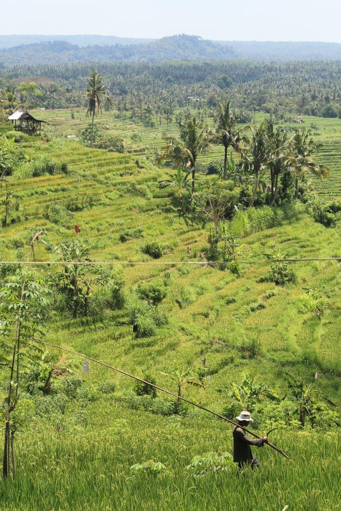 Balinese Field Worker